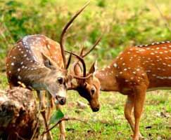 Ranakpur Tourism Honeymoon